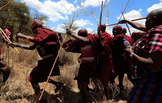 يتزوج رجل الماساي  10 نساء ويستحم  فقط تحت المطر