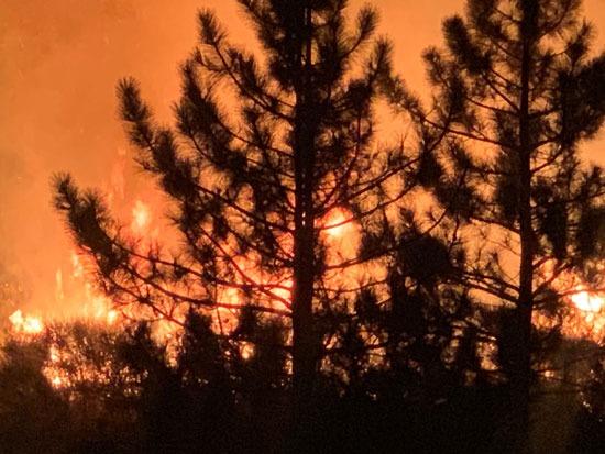 النيران تدمر الأشجار الخضراء