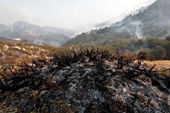 النيران تدمر المساحات الخضراء