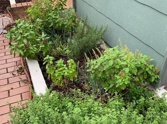 زرع النباتات