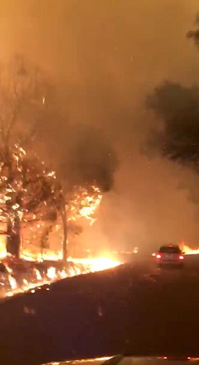 النار تاكل الأشجار