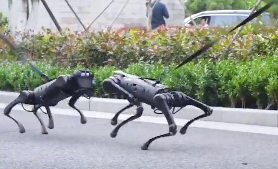كلاب فى دورية شرطة بكندا