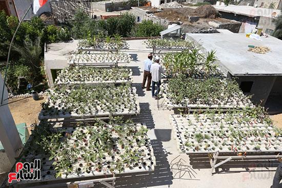 أحواض-زراعة-الأسطح
