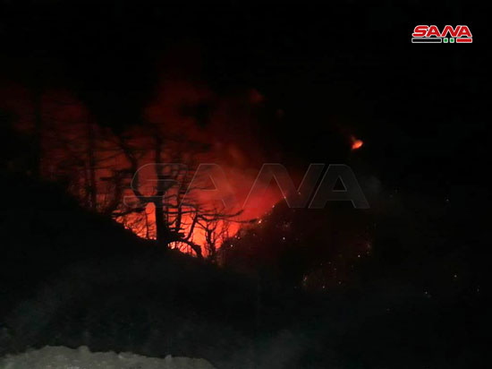 النيران تلتهم محمية الشوح بسوريا (2)