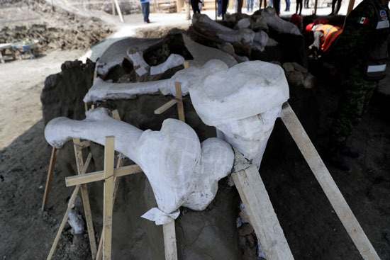 علماء الأثار وضعوا الهياكل العظمية على ألواح خشبية خاصة