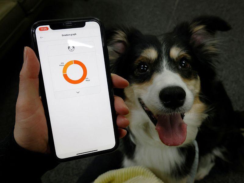 التطبيق يخبرك بالحالة المزاجية لكلبك
