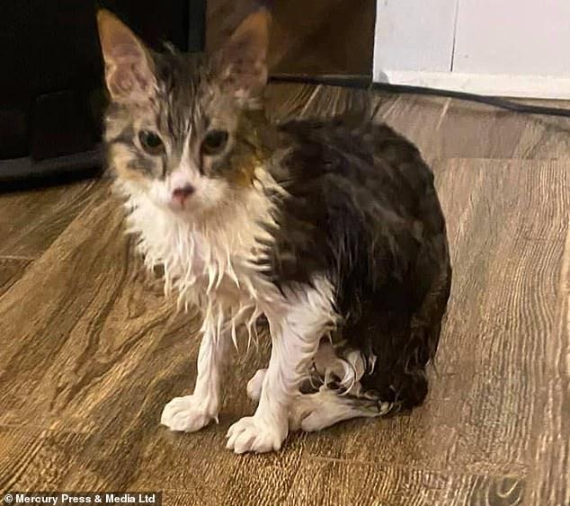 قطة تنجو من الموت من داخل غسالة أتوماتيك بعد تشغيلها  (4)