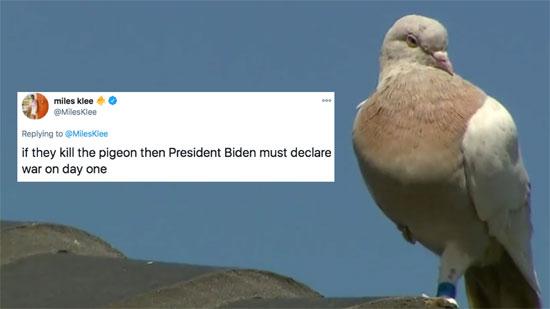 تحول الطائرة جو إلى ترند على تويتر
