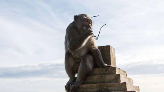 عصابة القرود (4)