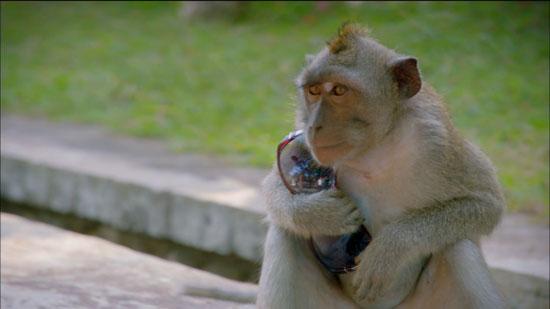 عصابة القرود (6)