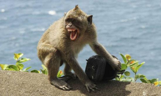 عصابة القرود (5)