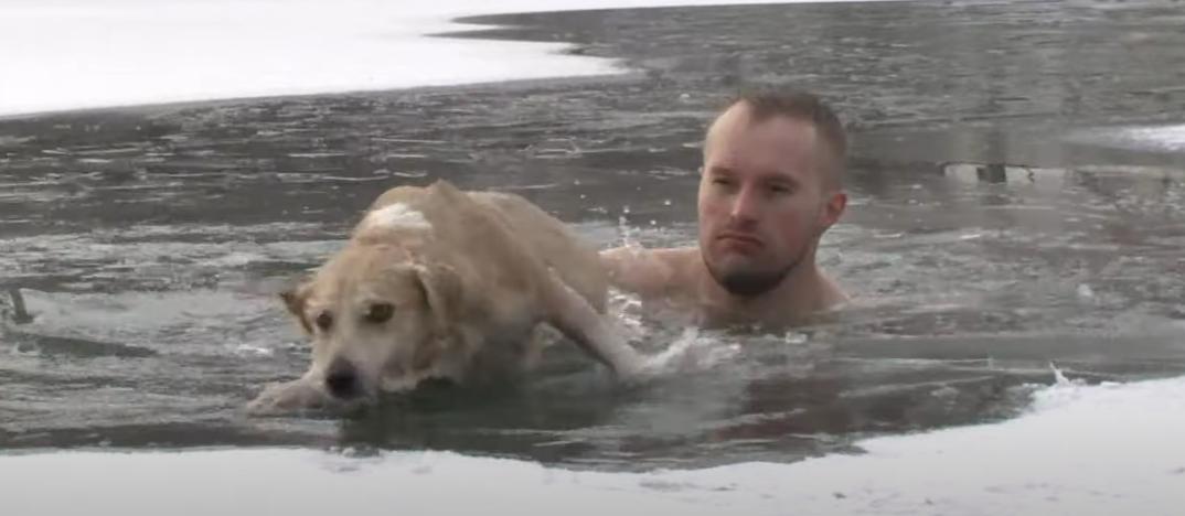 الصحفى ينقذ الكلب