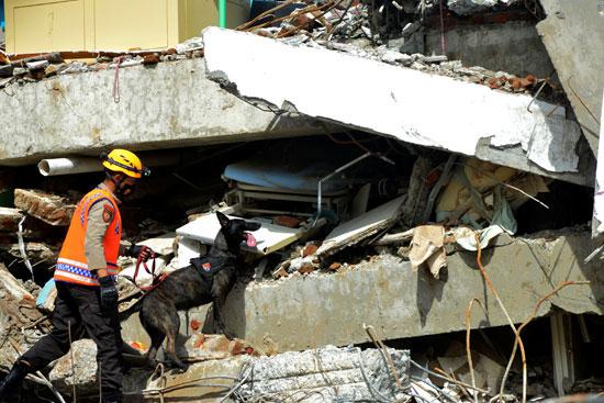 كلب-بوليسي-يبحث-عن-الضحايا-بين-أنقاض-مبنى-مستشفى-انهار-في-أعقاب-زلزال