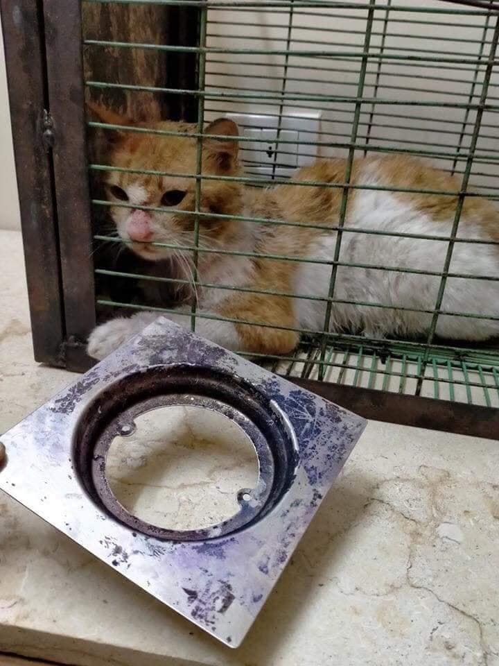 القط بعد غنقاذه