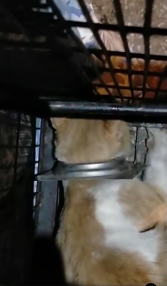 قط المنيا