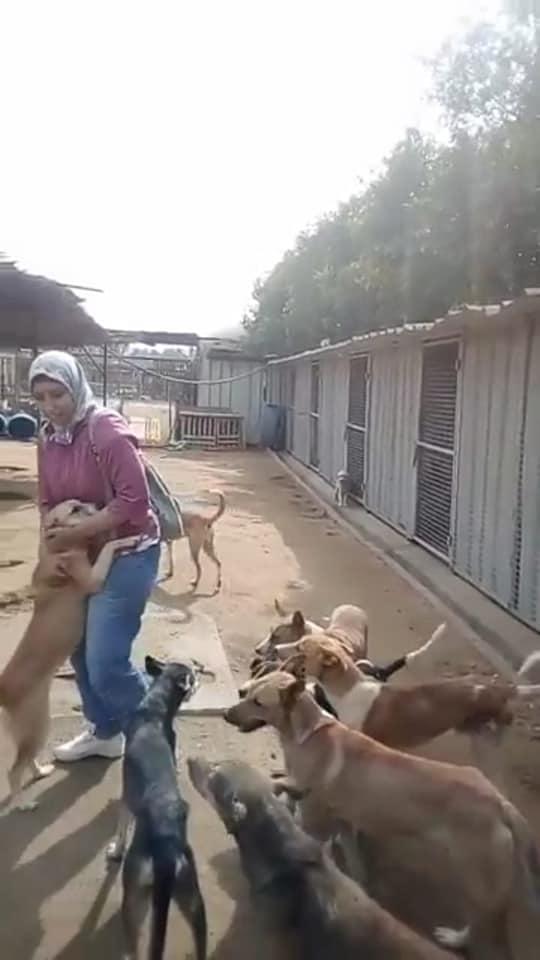 سمر تتعامل مع الحيوانات