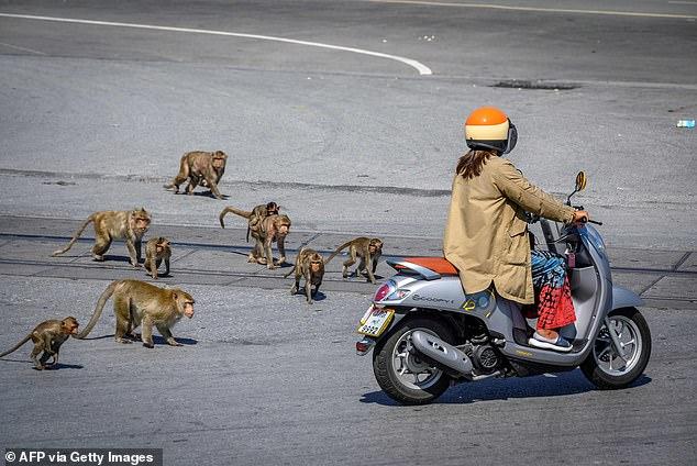 القرود تهاجم المواطنين