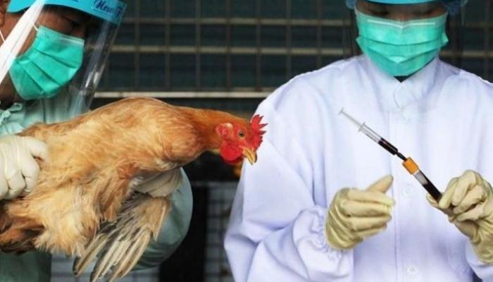 162-092220-china-epidemics-hit-bird-flu-outbreaks-corona_700x400