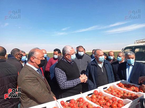 وزيرا الزراعة والرى يتفقدان مزرعة الطماطم (1)