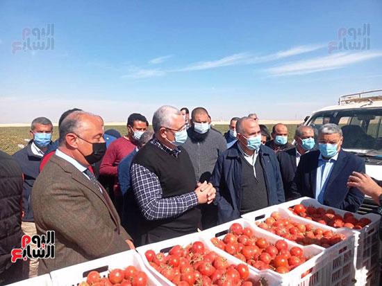 وزيرا الزراعة والرى يتفقدان مزرعة الطماطم (3)