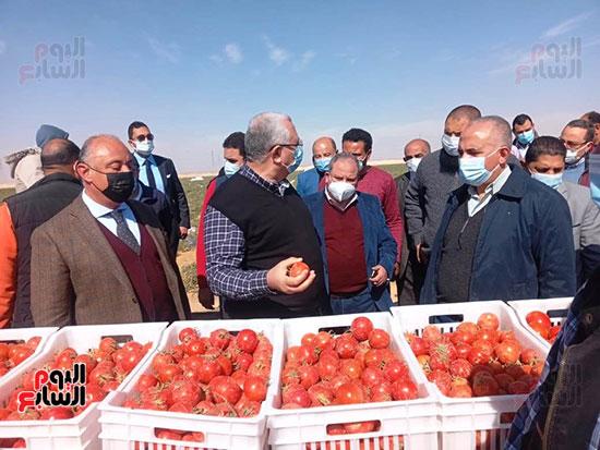 وزيرا الزراعة والرى يتفقدان مزرعة الطماطم (2)