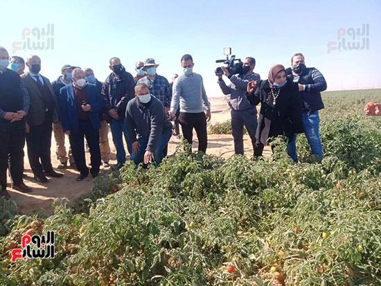 وزيرا الزراعة والرى يتفقدان مزرعة الطماطم (5)