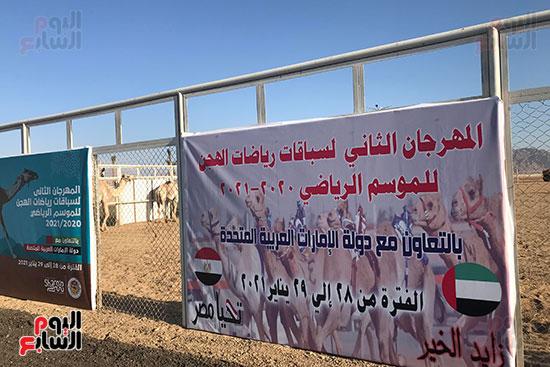 فعاليات سباق الهجن بشرم الشيخ (3)