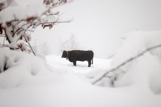 حيوان وسط الثلج