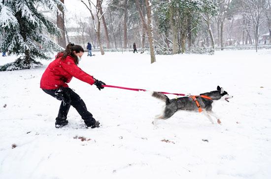 سيدة تلعب بكلبها وسط الثلج