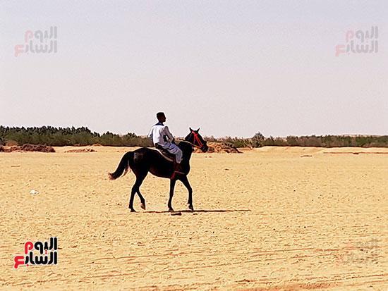 أحد-الأحصنة-المشاركة