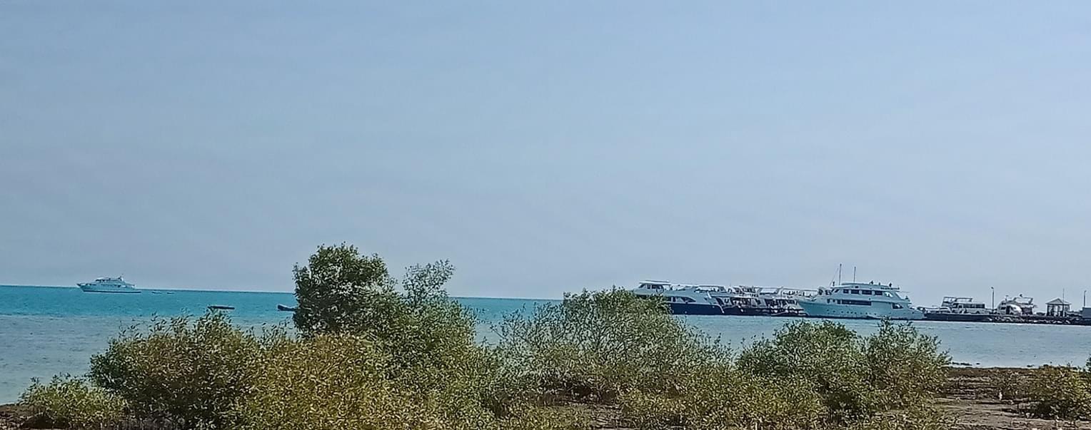 انتعاشة فى حركة الرحلات البحرية السياحية (1)