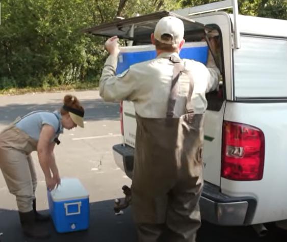 نقل السلاحف الى الحياة البرية