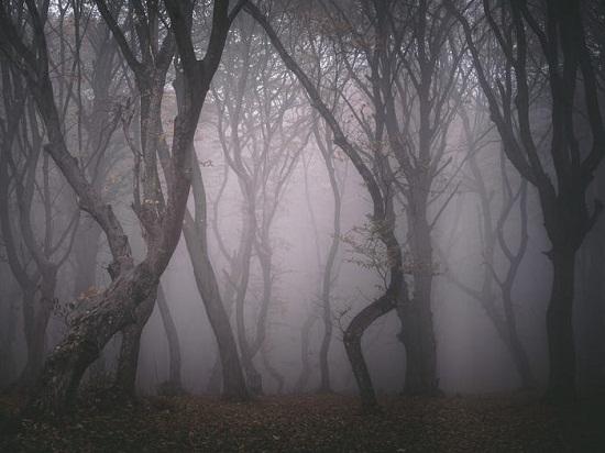 Hoia Baciu . Forest