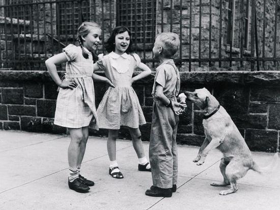 كلب يأكل أيس كريم