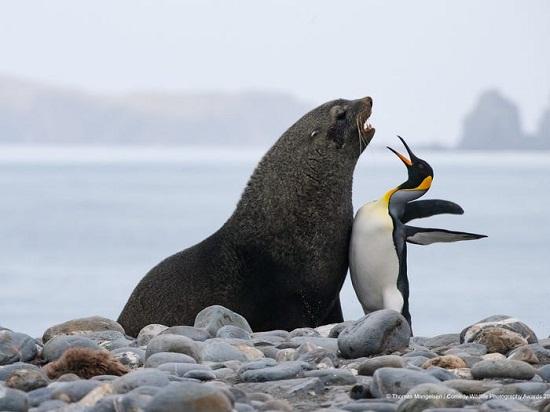 sea dog penguin