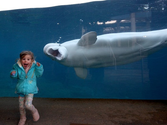 baby girl with whale