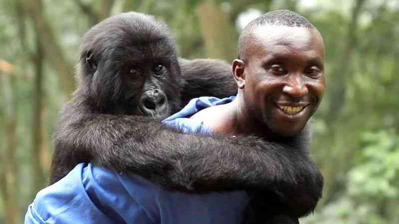 The guard was playing with the gorilla before