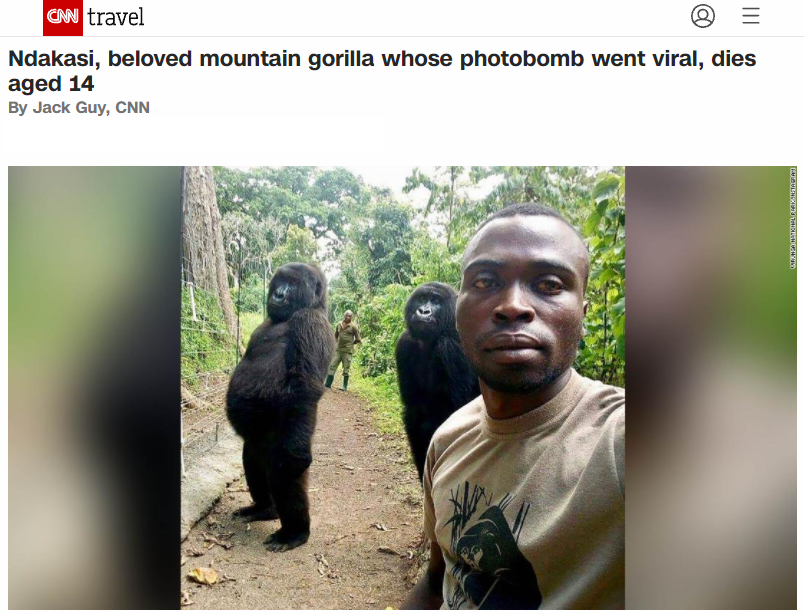 The report from CNN