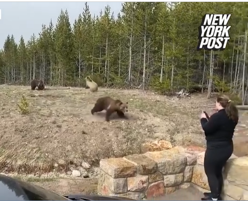 Time for the lady to approach the bear