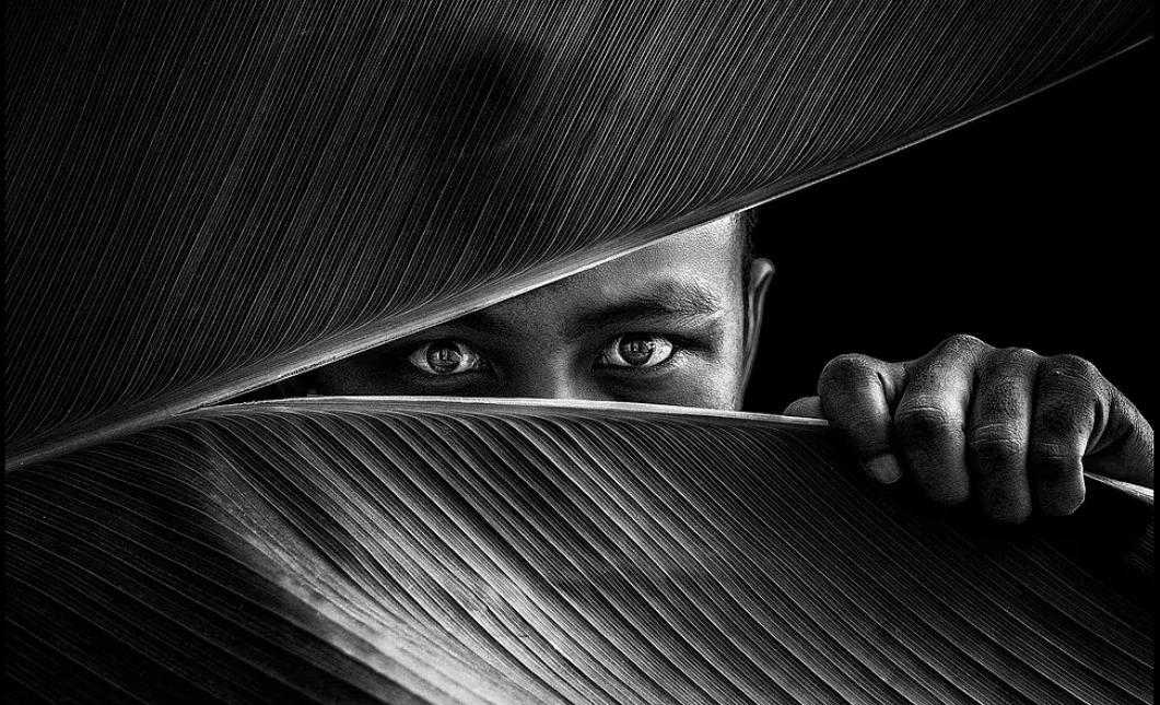 شخص يختبئ خلف ورقة نخيل