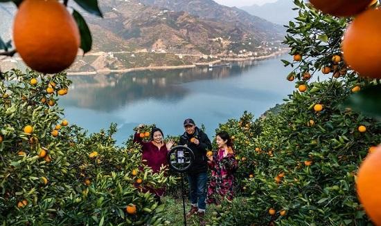 التقاط صورة في مزارع البرتقال