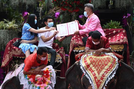 2021-02-14T065750Z_976070170_RC26SL9UNIEJ_RTRMADP_3_VALENTINES-DAY-THAILAND-ELEPHANTS
