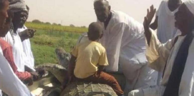 المزارع مع التمساح بعد اصطياده