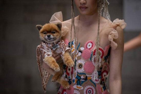 الكلاب عارضات الأزياء (3)