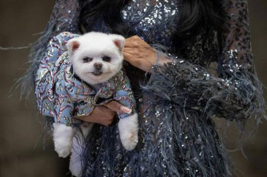 الكلاب عارضات الأزياء (2)