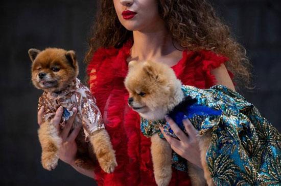 الكلاب عارضات الأزياء (1)