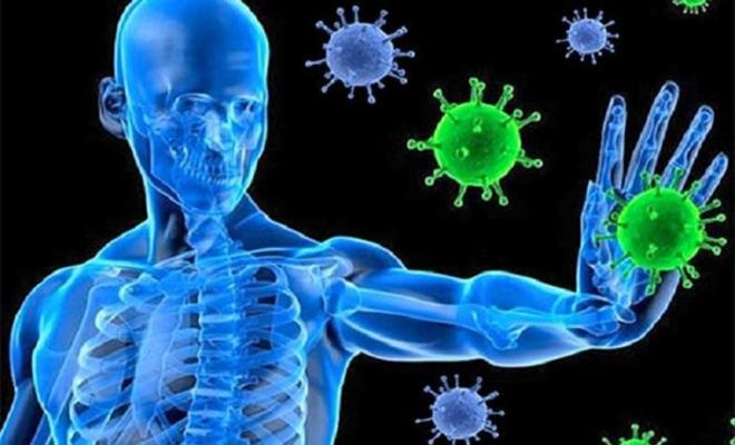 مواجهة فيروس نيباه