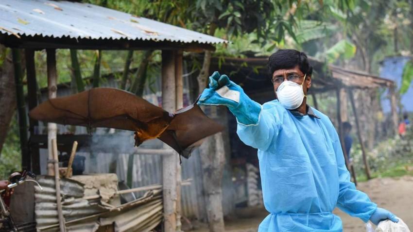 الخفافيش سبب انتقال فيروس نيباه