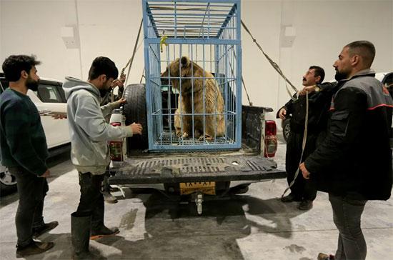 الدب البنى (5)