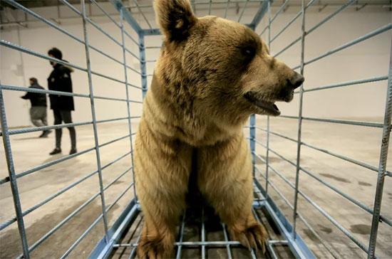 الدب البنى (3)